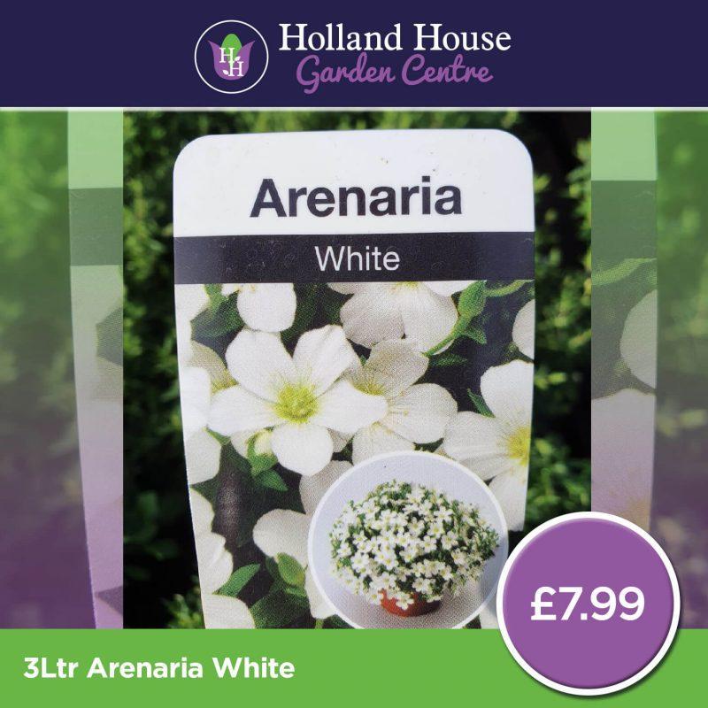 3ltr Arenaria White