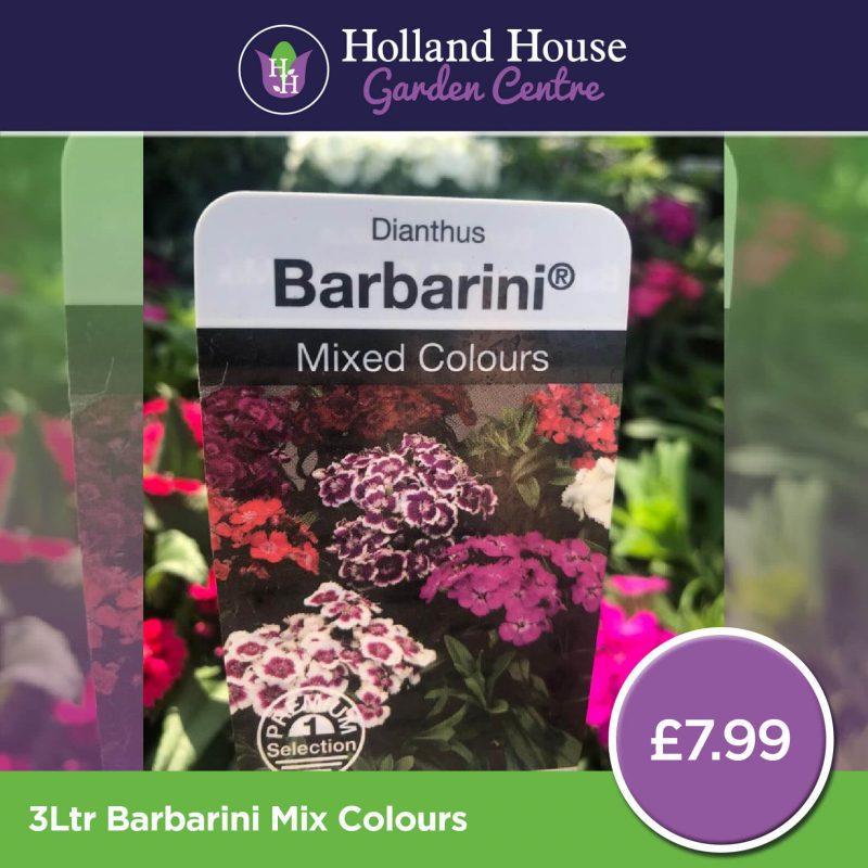 Barbarini Mix