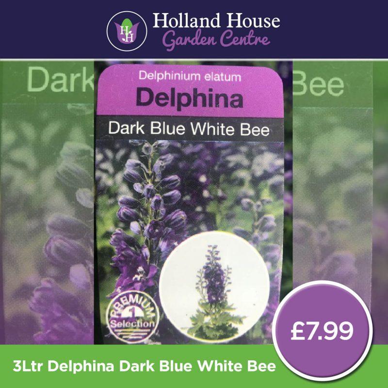 Delphinium Elatum Delphina Dark Blue White Bee
