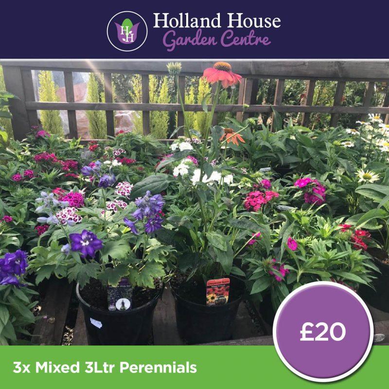 3x 3ltr Mix Perennials