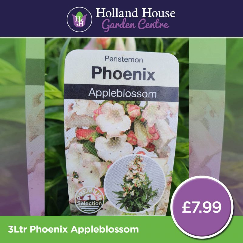 Phoenix Appleblossom