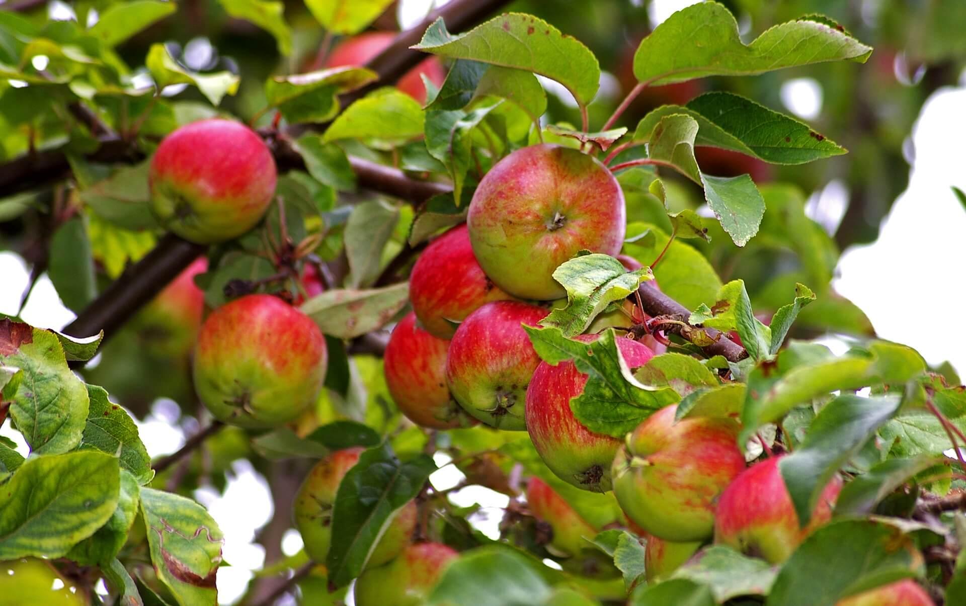 5 Garden Tips for Late September